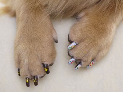 nail polish on a dog
