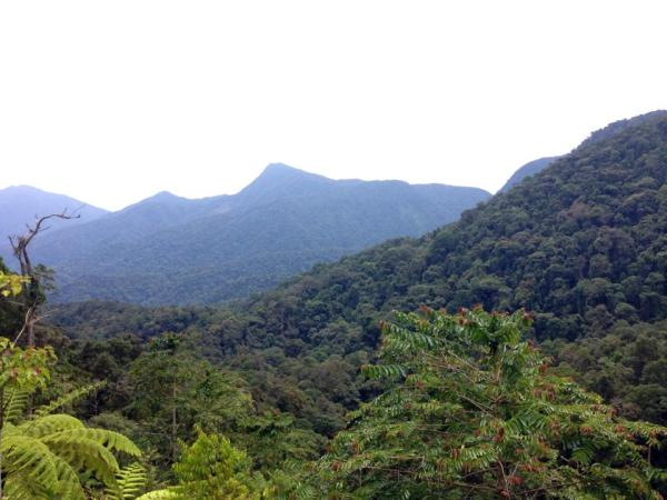Forest malaysia 2
