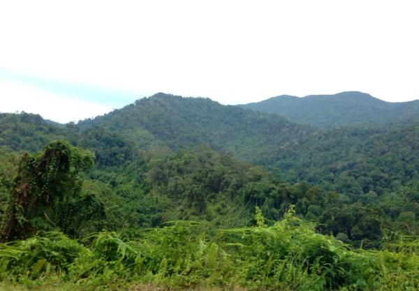 Forest Malaysia