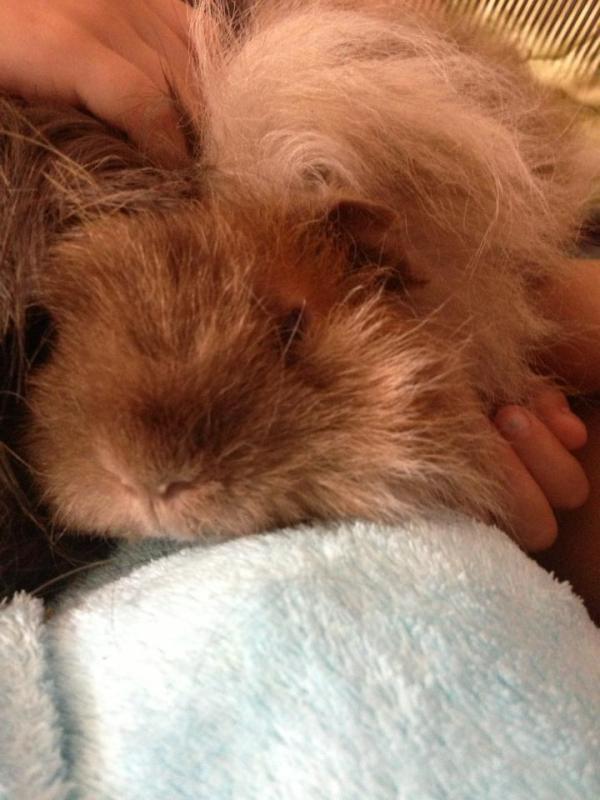 Emmie cuddles time