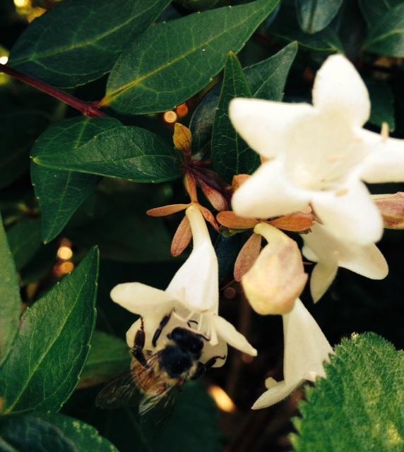 Photo of bee