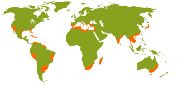 Lemon Growing Regions of the world from Wikipedia