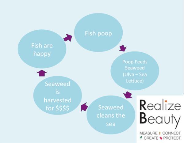 The fish poop circle of life