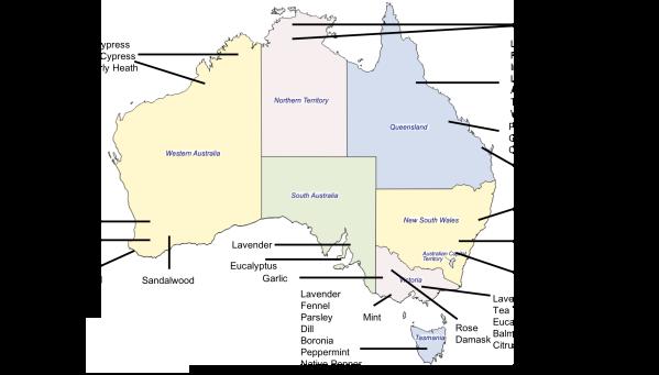 Australian Grown Essential Oils